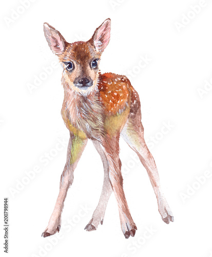 Photo  Watercolor animal fawn baby isolated on white background