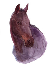 Watercolor Animal Horse Isolat...