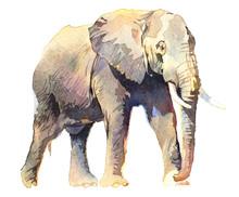 Watercolor Animal Elephant Iso...