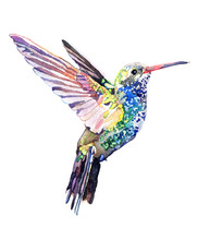Watercolor Animal Colibri Isol...