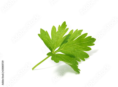 Parsley isolated on white