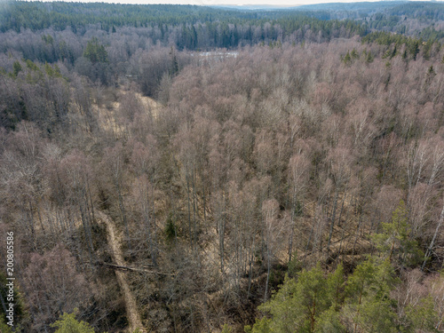 Fotobehang Grijs drone image. aerial view of endless forests