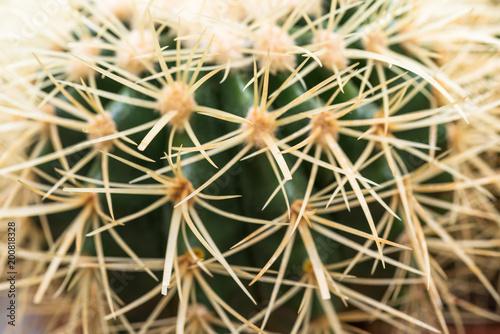 Tuinposter Cactus Golden Barrel Cactus