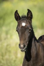 Foal Profile