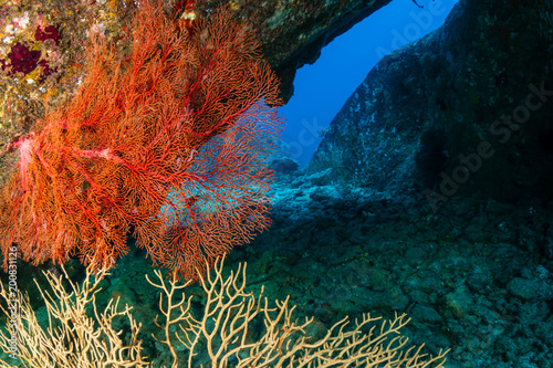 Poster Coral reefs Underwater archway on a coral reef