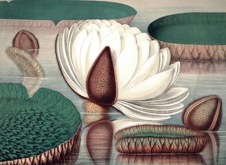 Panel Szklany Podświetlane Vintage Illustration of plant