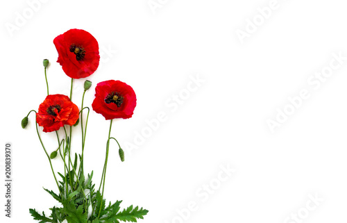 Obraz Flowers red poppies (Papaver rhoeas, common names: corn poppy, corn rose, field poppy, red weed) on a white background with space for text. Top view, flat lay. - fototapety do salonu