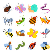 Cute And Funny Bugs, Insects V...