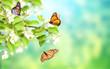 Leinwandbild Motiv Flowers of apple-tree and monarch butterflies