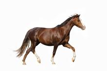 Cute Miniature Horse Over A Wh...
