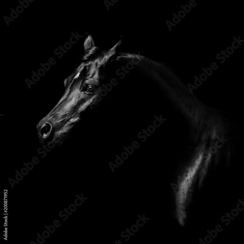 Keuken foto achterwand Paarden Silhouette of a black arabian horse isolated on black background