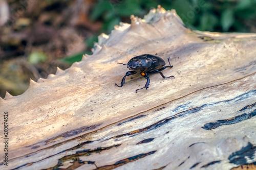 Foto op Plexiglas Textures Beetle in nature on a tree trunk