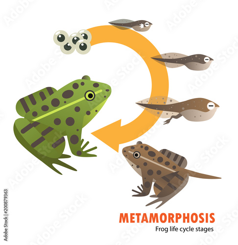 Fotografija  frog life cycle metamorphosis
