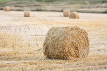 Bales Of Hay Are Lying In The ...