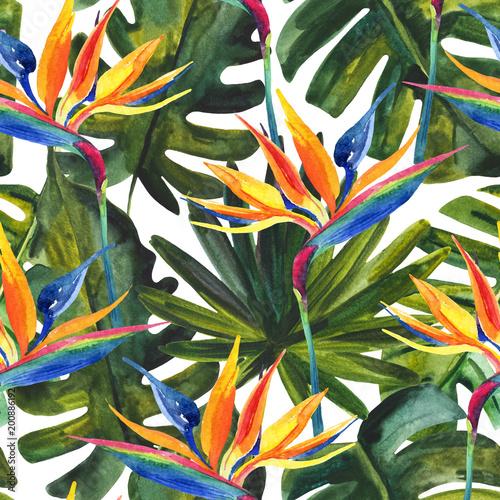 akwarela-tropikalny-wzor-z-kwiatu-rajskiego-ptaka-monstera-lisc-palmowy