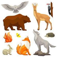 Set Of Woodland Forest Animals...