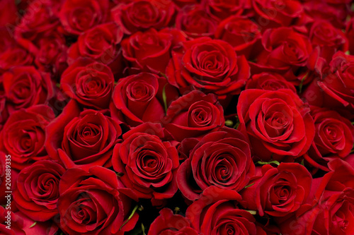 lots of roses background #200889335