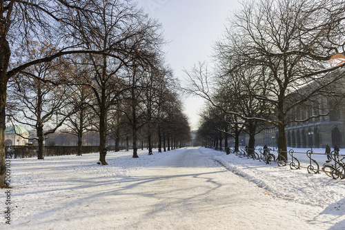 Fototapeta Snowy Pathway in Munich with trees obraz na płótnie