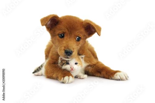 Fotografie, Obraz Little puppy lies with newborn kitten