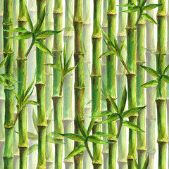 Panel Szklany Bambus Green bamboo forest seamless pattern