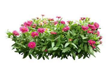 flower bush tree isolated with clipping path