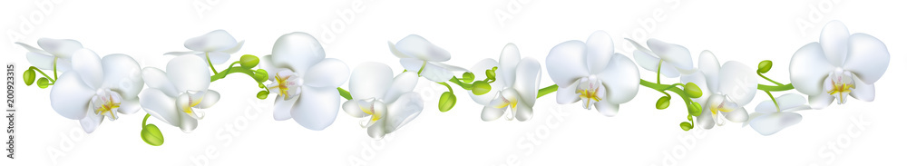 Fototapety, obrazy: Orchids. Flowers. White. Tropical plants. Isolated. Floral background. Horizontal pattern.
