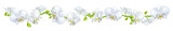 Fototapeta Storczyk - Orchids. Flowers. White. Tropical plants. Isolated. Floral background. Horizontal pattern.