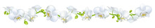 Orchids. Flowers. White. Tropi...