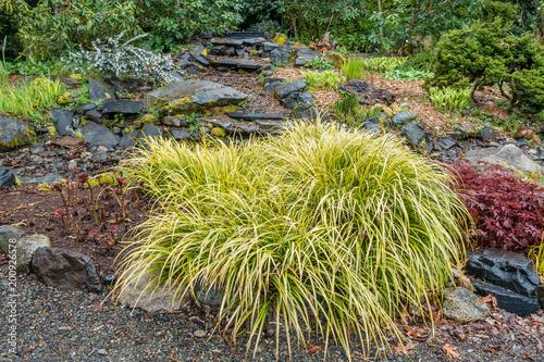 Fotografie, Obraz  Wispy Sedge Plant