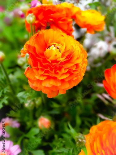 Plakat Zamknij się na pomarańczowy kwiat