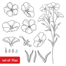 Vector Set With Outline Flax Or Linseed Or Linum Flower Bunch, Bud And Leaf In Black Isolated On White Background. Ornate Cultivated Flax Plant In Contour Style For Summer Design And Coloring Book.