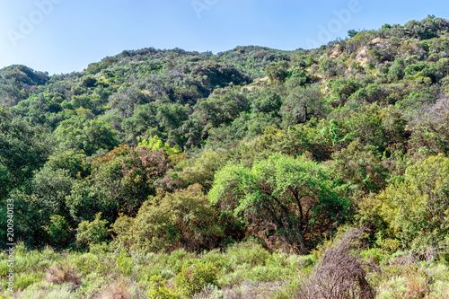Tuinposter Pistache High brush grows in Southern California mountains
