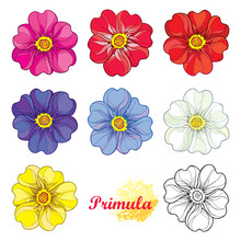Vector Set With Outline Bloomi...