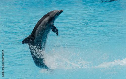 In de dag Dolfijn Dolphin jumping above blue water