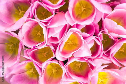 Spring Flowers Banner Bunch Of Pink Tulip Flowersbright Floral