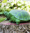 Decorative big green turtle, zen garden koncept