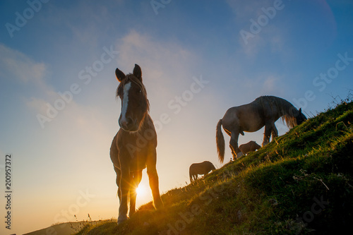 horse grazing in the mountains at sunset Poster