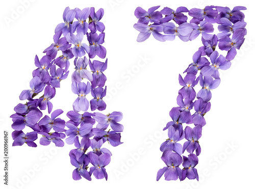 Poster  Arabic numeral 47, forty seven, from flowers of viola, isolated on white backgro