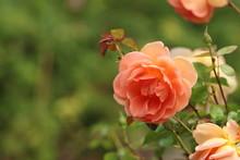 Peach Colored / Orange Pastel ...