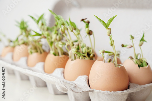 Valokuva  seedling plants in eggshells, eco gardening,  montessori, education concept, reu