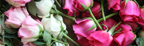 Wall Murals Floral Pink an white roses