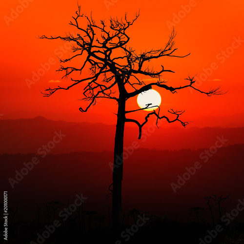 Montage in der Fensternische Rot Dead tree & Sunrise silhouette.
