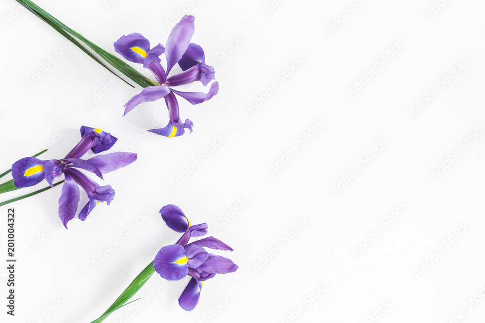 Fototapeta Flowers composition. Spring iris flowers on white background. Flat lay, top view, copy space
