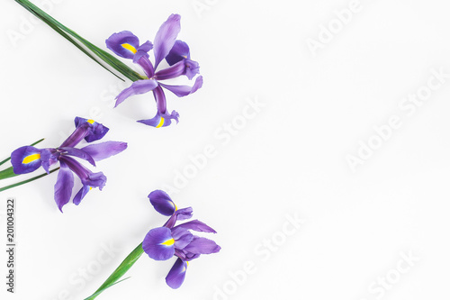 Flowers composition. Spring iris flowers on white background. Flat lay, top view, copy space