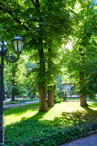 Photo  morning in summer city park, bright sunlit, green trees and shadows
