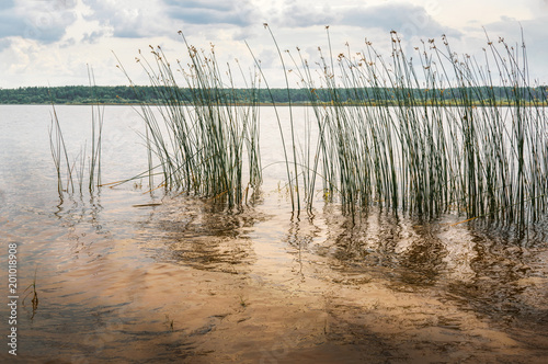Photo nature purity grass on the river bank