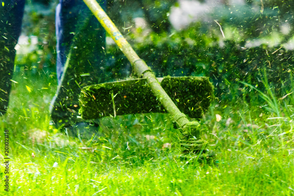 Fototapety, obrazy: grass cutting in the garden