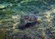 Unterwasserwelt im Urlaub