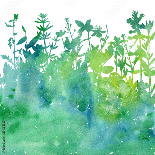 Watercolor background with drawing herbs and flowers
