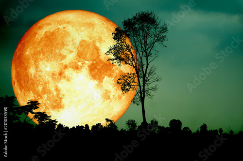 super full blood moon back silhouette branch tree dark forest green sky